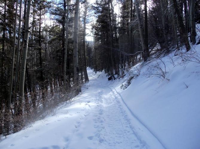 Mt. Taylor trail