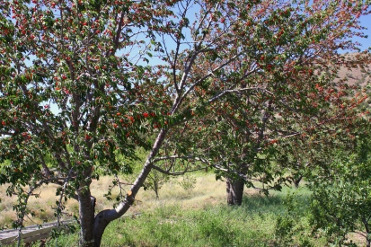 Wild Cherry Farm.JPG